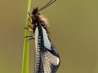 Altri insetti